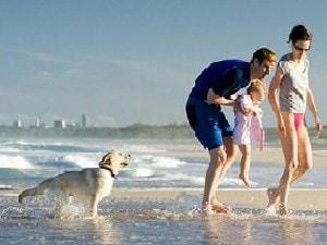 Siti per organizzare le vacanze con il cane