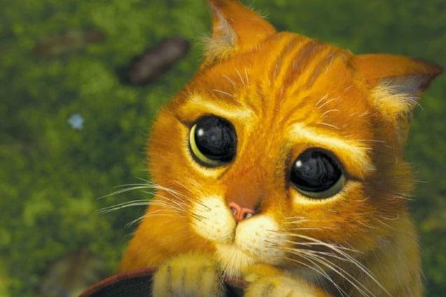 Drogon è il vero gattino dagli occhioni dolci