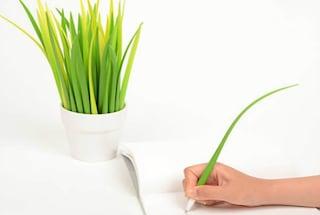 La pianta che mimetizza le penne