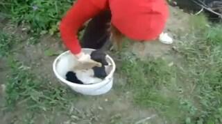 Croazia, video shock: getta cuccioli di cane nel fiume, si urla giustizia