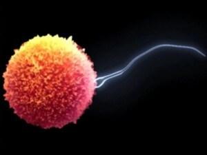 nipote dona sperma alla zia inseminazione artificiale
