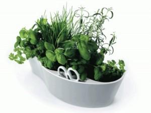 piante aromatiche in vaso tutto anno