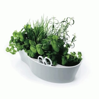Come coltivare piante aromatiche: consigli per averle fresche in inverno