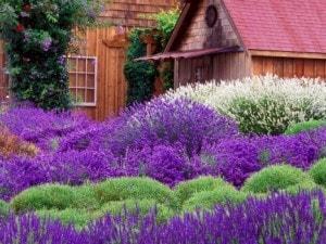giardino mediterraneo con cespugli
