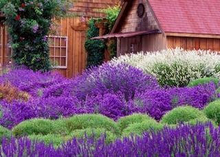 Come realizzare un giardino mediterraneo: consigli per disporre piante e fiori