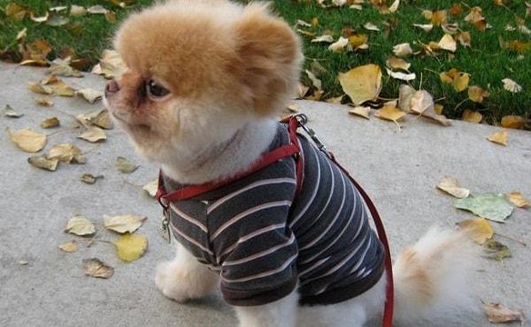 La tshirt preferita di Boo