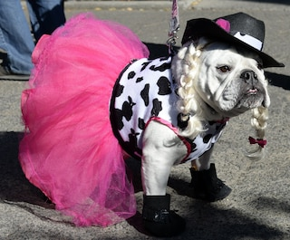 A New York anche i cani festeggiano Halloween (VIDEO)