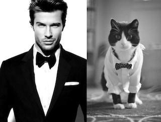 I gatti fanno il verso agli uomini più belli e affascinanti (FOTO)