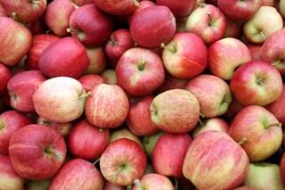 Dimagrire con i rimedi naturali: prova l'aceto di sidro di mele