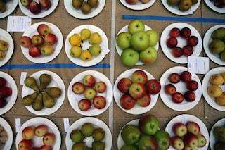 10 cibi che ti saziano a lungo: ecco come combattere la fame