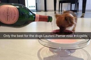 Champagne rosé al cane, sfacciati e incoscienti: ecco i ricconi teenager