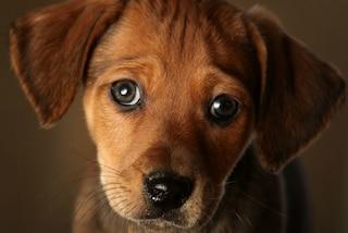 Sarezzo, cucciolo di cane di soli 6 mesi ucciso da un boccone avvelenato: secondo caso in un mese