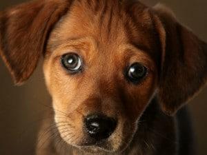 Treviglio Lospedale Si Apre Agli Animali Cani E Gatti Potranno