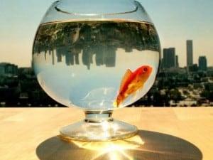 sharkscope_fish