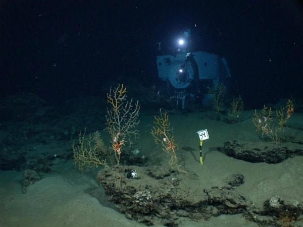 Diversi studi, condotti nell area del golfo del Messico interessata dallo sversamento di petrolio verificatosi a partire dall aprile del 2010, hanno confermato come l impatto su flora e fauna di tutta l area sia stato al di sopra delle più catastrofiche previsioni.