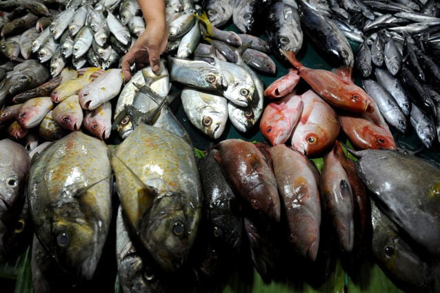 ultimo pesce italiano fish dependence day