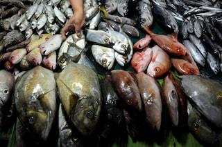 Il riscaldamento globale uccide gli animali marini il doppio rispetto a quelli terrestri