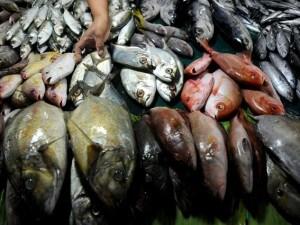 l ultimo pesce italiano per questa anno è stato mangiato