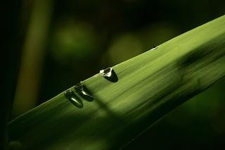 Il rifiuto solido che diventa liquido (e cristallino)