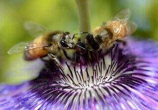 Le api capiscono il numero zero e i bambini no