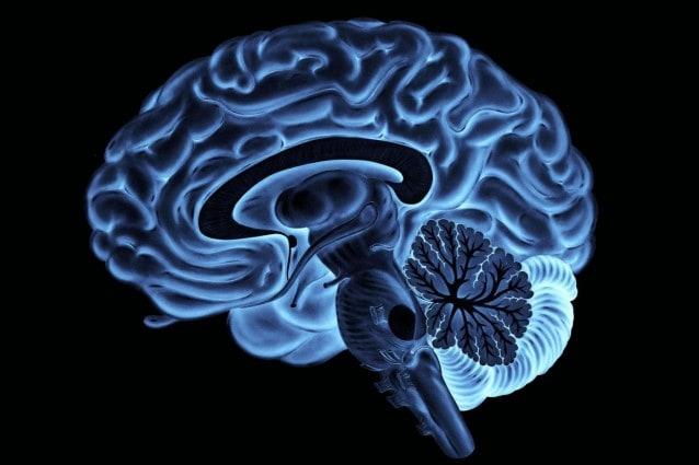 neuroscienze comportamento
