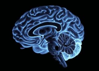 Parlare di sé per soddisfare il cervello