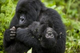 Un terzo dei siti naturali UNESCO è in pericolo