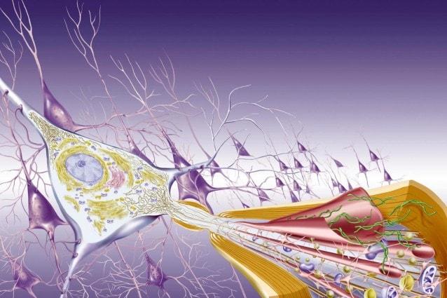 vaccino alzheimer trial clinico