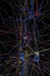 human_brain_project