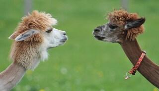 Gli animali possiedono consapevolezza: firmata a Cambridge una dichiarazione