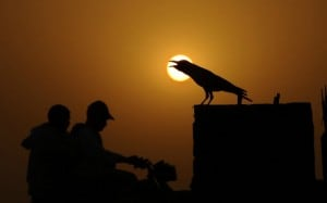 corvo della Nuova Caledonia