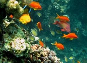 La biodiversità marina