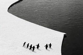Scoperta in Antartide una nuova colonia di pinguini imperatore