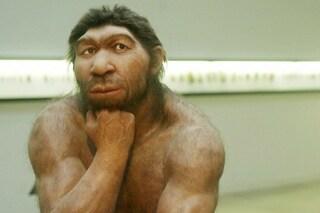 """""""Cercasi donna per mettere al mondo un Neanderthal"""": e la bufala è pronta per il web"""