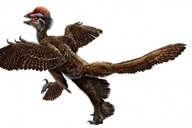dinosauri_piumati