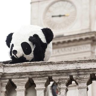 I panda ci salveranno dai superbatteri?