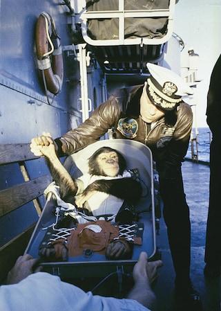 Non solo scimmie: tutti gli animali che sono stati nello spazio