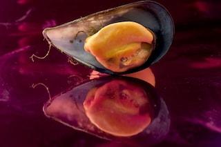 Dalle cozze una super-colla resistente all'acqua