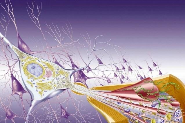 morbo alzheimer i malati triplicheranno entro il 2050