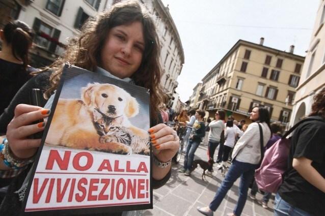 Brescia, la battaglia degli animalisti contro 'Green Hill'