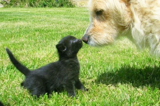 cane  e gatto piccolo