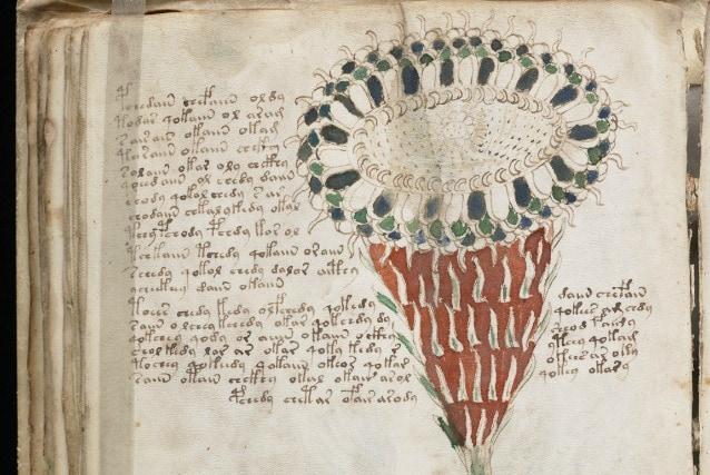 Particolare del verso del foglio 40, sezione botanica. (General Collection, Beinecke Rare Book and Manuscript Library, Yale University)
