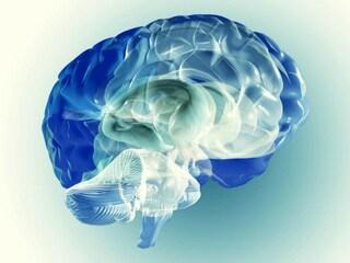 Lo smog fa invecchiare il cervello