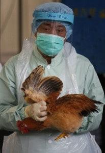 La principale preoccupazione degli esperti riguarda un aumento della trasmissione del virus tra uccelli ed esseri umani.