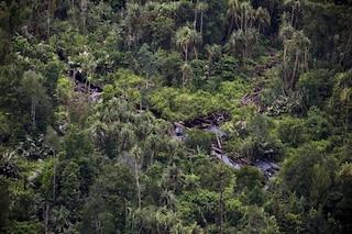 """L'allarme del WWF: """"Le foreste sono l'antivirus del pianeta, le stiamo uccidendo"""""""