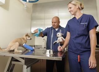 Sperimentazione animale, ricercatori contro la nuova legge