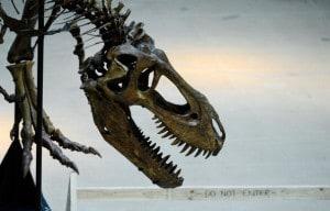 Continueremo a vederli così… (esemplare di giovane T–Rex al Museo di Storia Naturale di Los Angeles)