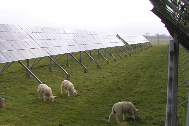 Pecore che pascolano nei pressi della centrale solare di Pellworm.
