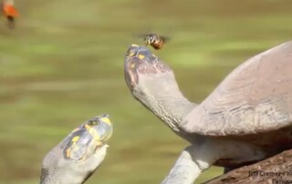 """Api e farfalle che si nutrono della """"tristezza"""" altrui (VIDEO)"""