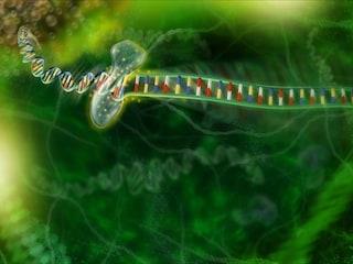 Gli scienziati hanno mappato il genoma di una intera nazione
